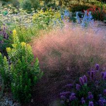 谢谢小花 粉黛乱子草 蒲苇 多年生耐寒耐寒观赏草 网红盆栽植物苗
