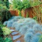 地被植物庭院花园户外地栽蓝羊茅多年生美化四季常青耐寒盆栽