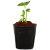 营养杯育苗盆育苗袋育苗杯育苗盒营养钵营养袋加厚塑料一次性花盆